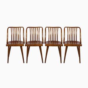 Sillas checas de madera de Antonin Suman para TON, años 60. Juego de 4