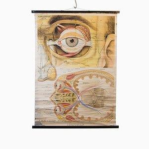 Frontal Eye School Chart by Rudolf Schick & Co, 1916