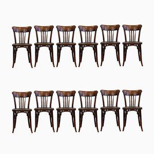 Chaises de Café en Bois Courbé, 1910s, Set de 12