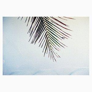 Honokowai Palms Print by Gutterdust
