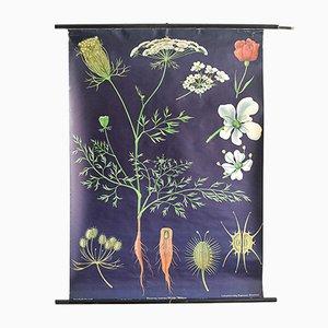 Botanical Poster by Jung, Koch, & Quentell for Hagemann, 1960s