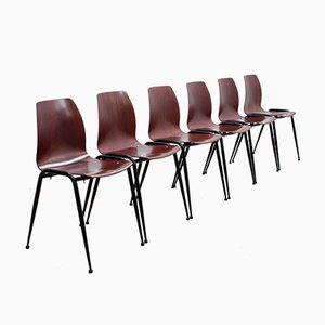 Rosewood Dining Chairs by Pagholz Flötotto, 1950s, Set of 6