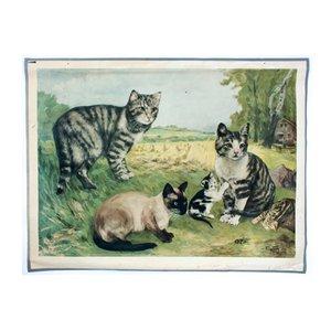 Stampa scolastica raffigurante gatti di Vil. Tupy, 1923