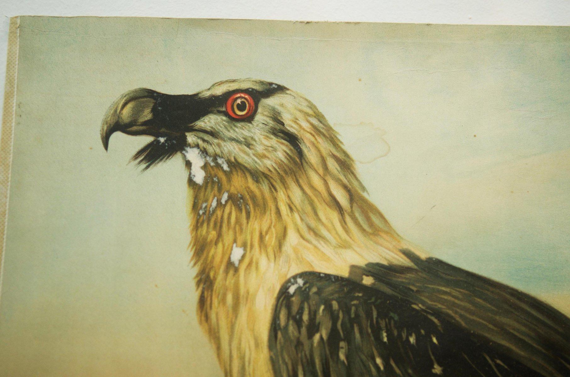 poster eagle - Ordek.greenfixenergy.co