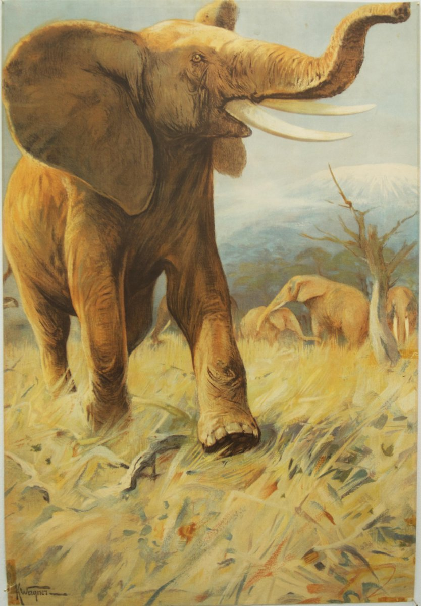 Vintage german school poster elephant for sale at pamono for Designhotel elephant prague 1 czech republic