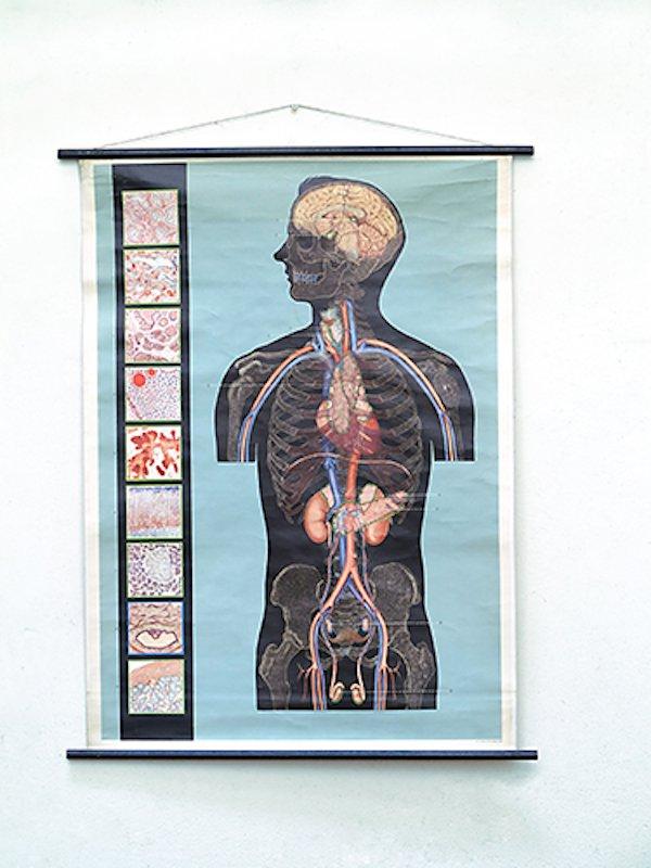 Nett Die Geschichte Der Anatomie Fotos - Menschliche Anatomie Bilder ...