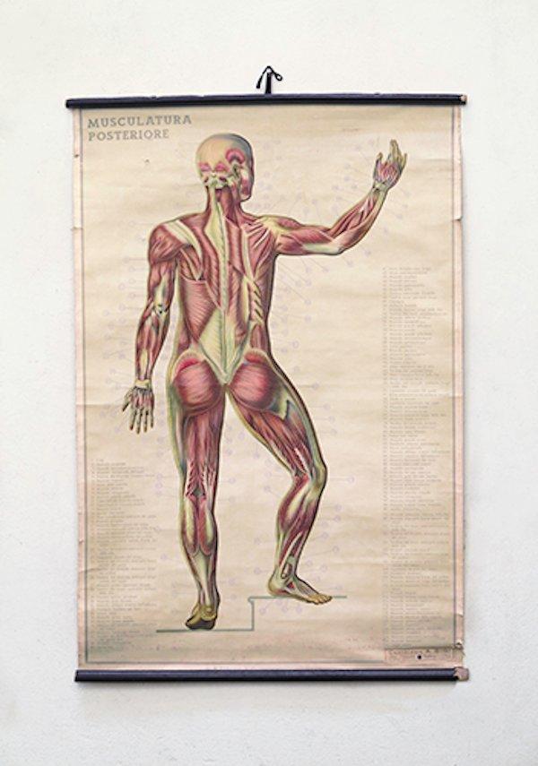Italian Anatomical Wall Chart for sale at Pamono