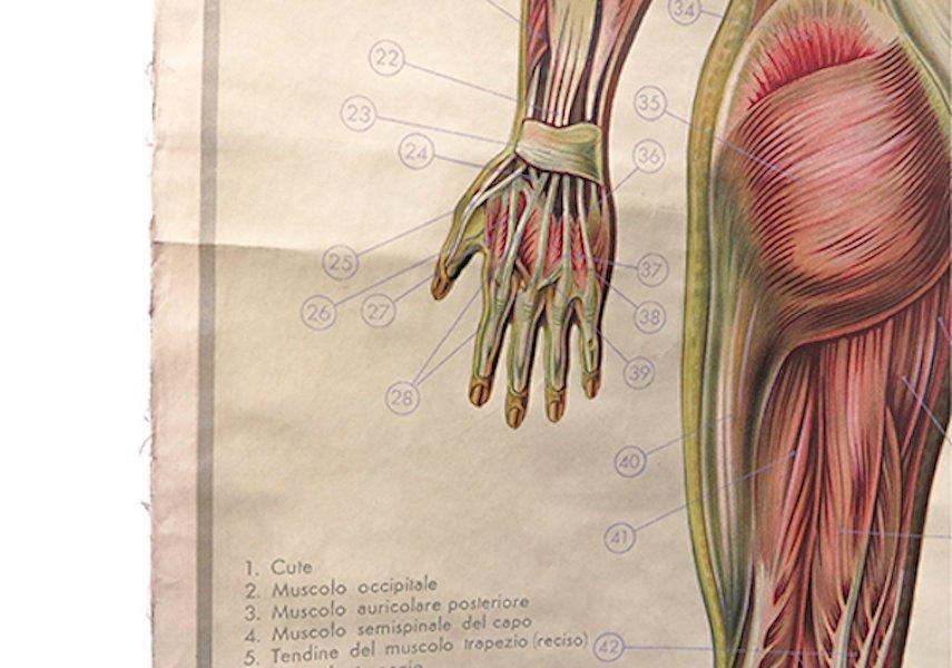 Niedlich Anatomie Wandkarte Ideen - Anatomie Ideen - finotti.info