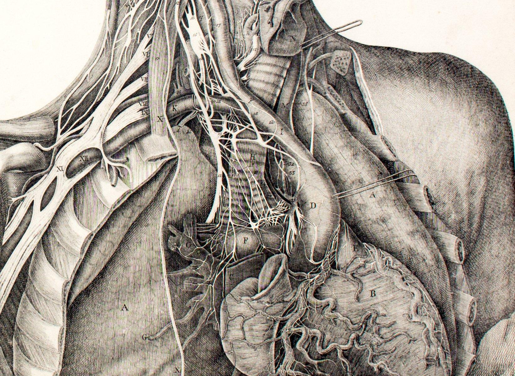 Gemütlich Zeigt Die Anatomie Des Menschlichen Körpers Galerie ...