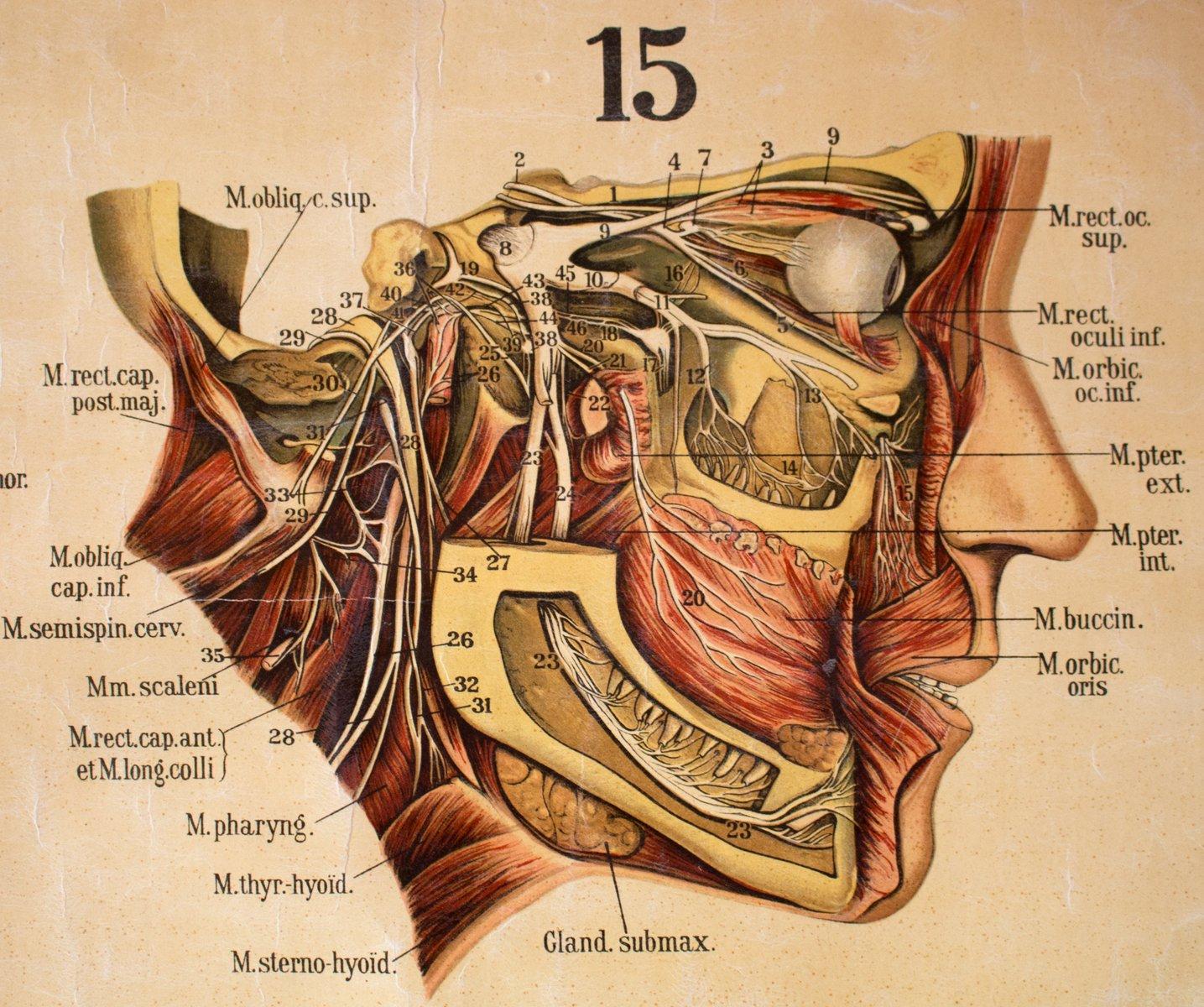 Großzügig Körper Anatomie Charts Bilder - Anatomie Von Menschlichen ...