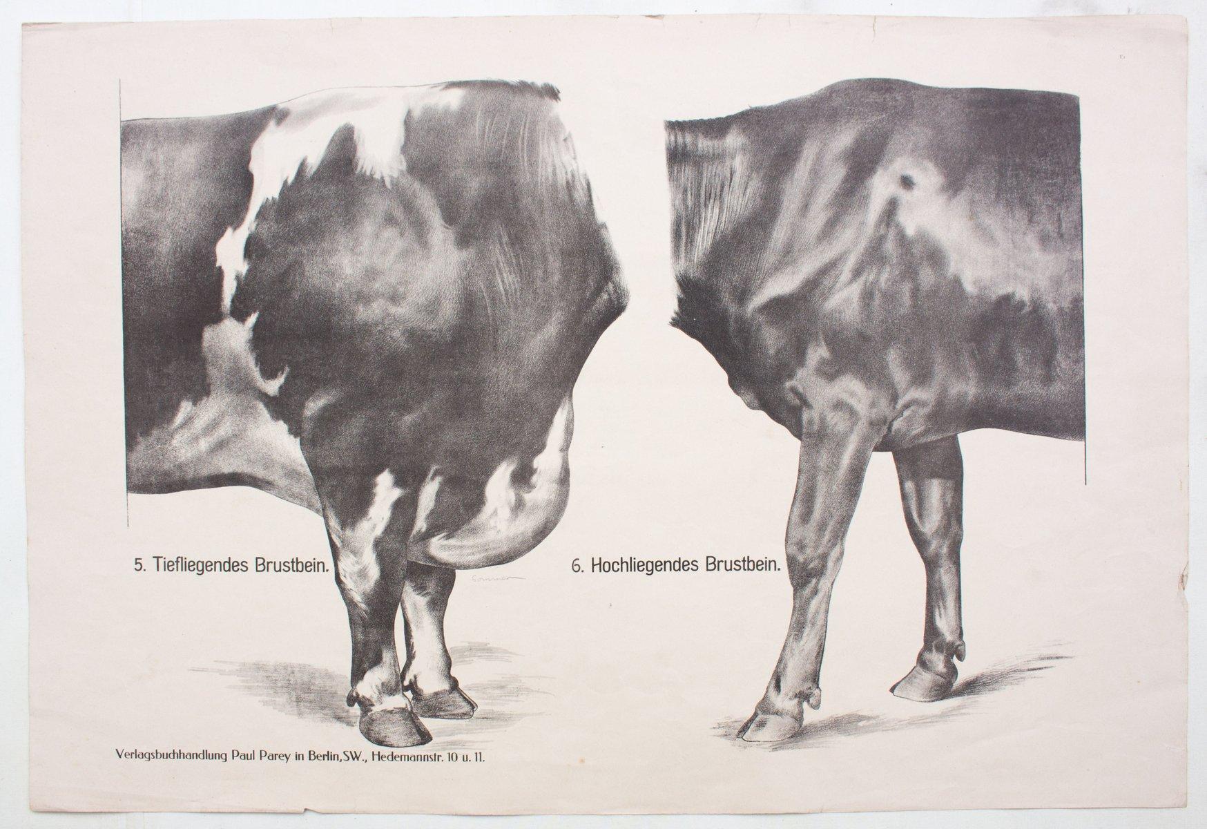Erfreut Kuh Auge Anatomie Bilder - Menschliche Anatomie Bilder ...