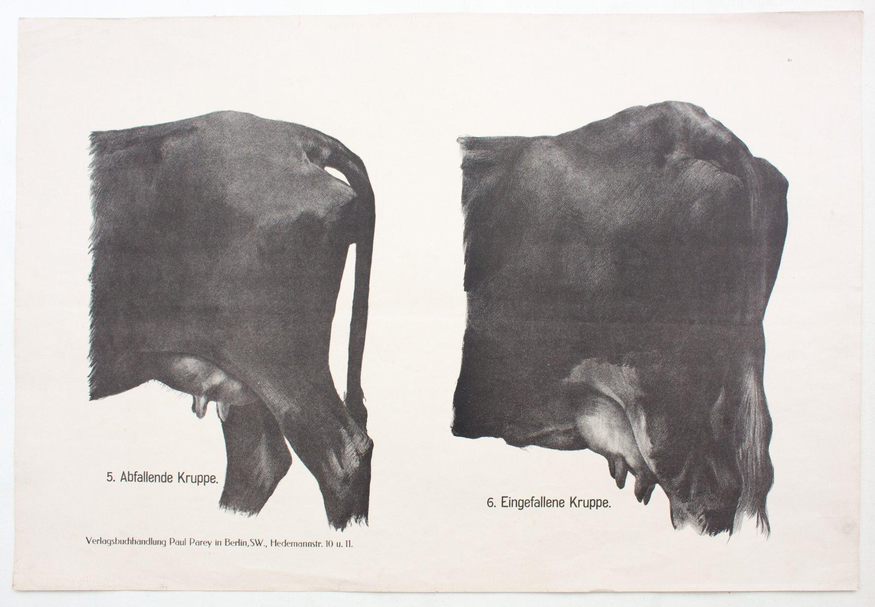 Berühmt Papiere Anatomie Und Physiologie Frage Fotos - Menschliche ...