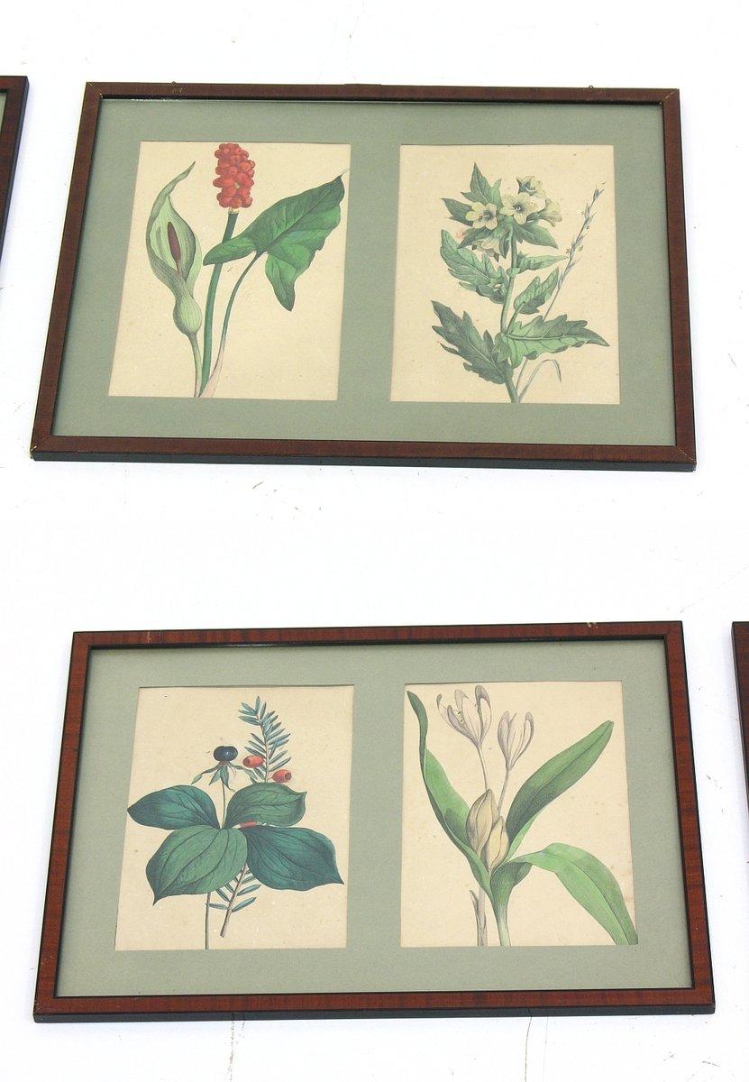 Fantastisch Gerahmte Drucke Botanischen Zeitgenössisch ...