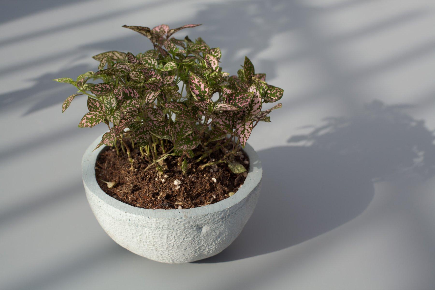 Stone fruit planter cantaloupe by chen chen kai for Planter en anglais